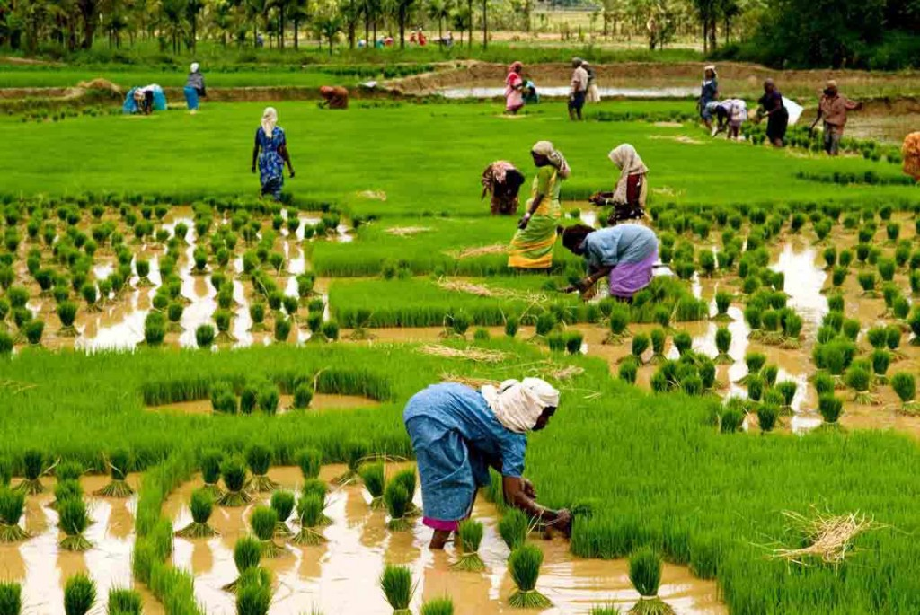 demonitizatio-effect-on-agriculture